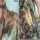 تومور زانتومس (Xanthomas) در پرندگان زینتی و طوطی سانان