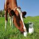 عوامل مؤثر بر پروتئین و چربی شیر