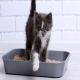 عفونت ادراری (UTI) گربه ها
