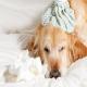 آنفولانزای سگی یا سرماخوردگی در سگ