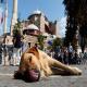 نگهداری سگ در آپارتمان از دیدگاه قوانین موضوعه ایران