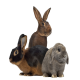 آشنایی با نژادهای خرگوش