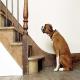ترس از پله در سگ