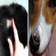 عفونت قارچی (RingWorm) در حیوان خانگی
