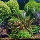 آموزش گام به گام ساخت آکواریوم گیاهی (آکواریوم پلنت)
