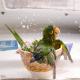 نکاتی مهم درباره حمام کردن طوطیها