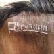 علائم مربوط به داغ اسب عرب
