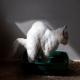 یبوست در گربه