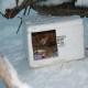 مراقبت از گربههای خیابانی از سرما