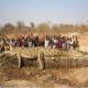 میزان و سرعت رشد تمساح و کروکودیل