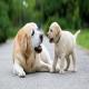 سن واقعی سگ نسبت به سن انسان