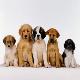 آموزش سگهای خانگی کلید خورد