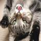 برای نگهداری گربه به چه چیزهایی نیاز است؟