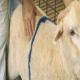 مشخص کردن نمره بدنی گوسفند