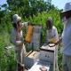 وسایل مورنیاز برای زنبورداری