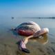 مرگ هزاران پرنده مهاجر در تالاب میانکاله
