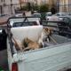 سگ کشی غیرقانونی شهرداری