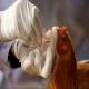 آنفولانزای پرندگان (AI) (بخش نخست)