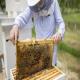 پیشنیازهای شروع زنبورداری