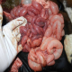 آنتروتوکسمی (Enterotoxaemia)