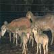 پشم خوری (Trichophagia)