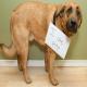 چرا سگ ها مدفوع خود را می خورند؟ راه حل آن چیست؟