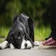 دلایل رفتاری مدفوع خواری سگ