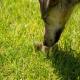 دلایل پزشکی که منجر به مدفوع خواری سگ می شود