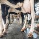دوازده راهکار برای کیفیت شیر