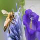حباب صابون جایگزین زنبورها می شود