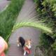 تشخیص و حذف گیاه جوموشه از بدن سگ