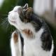 6 حساسیت غذایی رایج در گربه ها