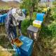 خصوصیات زنبورعسل اروپایی و ایرانی