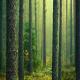 3 میلیون دام از جنگل های شمال خارج شد