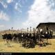 مزارع پرورش شترمرغ همدان