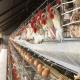 کاربرد شای سوی در تغذیه طیور تخمگذار