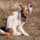 تشخیص جرب در سگ