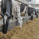 پیش بینی ارزش غذایی جیره روزانه گاوهای شیری