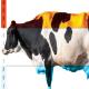 گرما بیش از آنچه گمان می کنید، به گاوها ضربه می زند