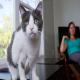 چگونه گربه مضطربی که از غریبه ها می ترسد را آرام کنیم