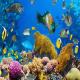 گونه های مختلف ماهی کدامند؟