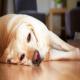 علائم خطری که نشان می دهد سگ به دامپزشک نیاز دارد