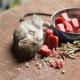 انوع مختلف مرگ موش برای انواع مختلف موش