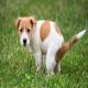 دلایل بروز یبوست و اسهال در سگ