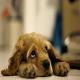 اسهال استرسی در سگ ها