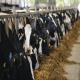 مدیریت افزودنی های غذایی و مواد افزاینده تولید، در ترکیب شیر