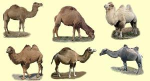 انواع نژادها
